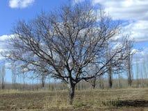 Baum des Lebens stockbilder