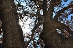 Baum des Lebens stockfotografie