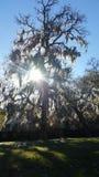 Baum des Lebens an einem sonnigen Tag Stockfoto