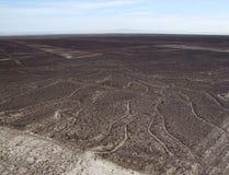 Baum des Lebens, Nazca-Linien Lizenzfreies Stockbild