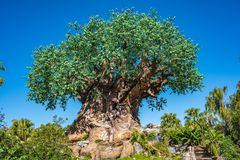 Baum des Lebens am Tierreich bei Walt Disney World Stockfotos