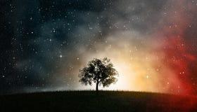 Baum des Lebens vor Kosmos des nächtlichen Himmels Stockfotografie