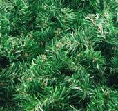 Baum des neuen Jahres lizenzfreie stockfotografie