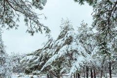 Baum des neuen Jahres Winterwaldin der schönen Winterlandschaft mit Schnee bedeckte Bäume Bäume abgedeckt mit Hoarfrost und Schne Lizenzfreies Stockfoto