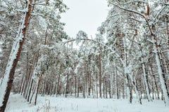 Baum des neuen Jahres Winterwaldin der schönen Winterlandschaft mit Schnee bedeckte Bäume Bäume abgedeckt mit Hoarfrost und Schne Stockfotos