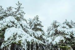 Baum des neuen Jahres Winterwaldin der schönen Winterlandschaft mit Schnee bedeckte Bäume Bäume abgedeckt mit Hoarfrost und Schne Lizenzfreies Stockbild