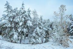 Baum des neuen Jahres Winterwaldin der schönen Winterlandschaft mit Schnee bedeckte Bäume Bäume abgedeckt mit Hoarfrost und Schne Stockbilder