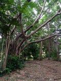 Baum des Waldes Stockfoto