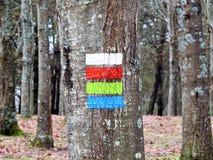 Baum des Waldes gemalt mit vier Farben Stockfotografie
