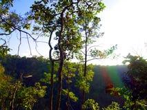 Baum des Waldes in Nationalpark Asiens, Thailand 8 Stockfotografie