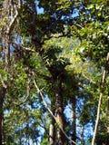 Baum des Waldes in Nationalpark Asiens, Thailand 5 Stockfotografie
