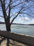 Baum durch das Schmelzen von See Lizenzfreie Stockfotografie