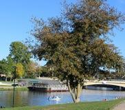 Baum durch den Fluss Lizenzfreies Stockfoto