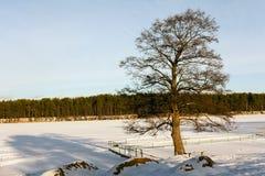 Baum durch den See im Winter Stockfotos