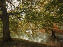 Baum durch den Teich Lizenzfreie Stockfotografie