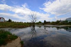 Baum durch den Teich Stockfotos