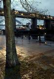 Baum durch den Tyne Stockbild