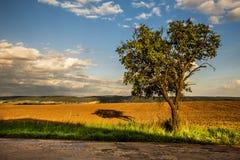 Baum durch die Straße und das Feld Stockfoto