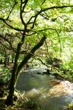 Baum durch Fluss lizenzfreie stockfotografie