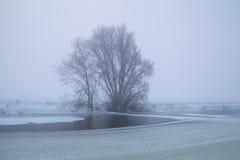 Baum durch gefrorenen See im Winternebel Lizenzfreies Stockbild