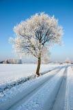 Baum durch Schnee deckte Straße ab Lizenzfreies Stockfoto