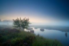 Baum durch See im dichten Nebel Lizenzfreie Stockfotos