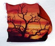Baum in durchbrennenpolaroidemulsionübertragung des winds. lizenzfreies stockbild