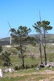 Baum in einem Berg Lizenzfreie Stockfotografie
