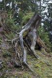Baum in einem forrest Stockfoto