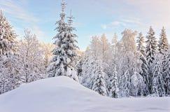 Baum in einem Hügel über dem Schnee bedeckte Wald in Ruka-Dorf herein Lizenzfreies Stockbild