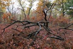 Baum in einem Meer des Rotes Lizenzfreie Stockbilder