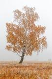 Baum in einem Nebel. lizenzfreies stockfoto