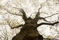 Baum in einem Nebel Stockfoto