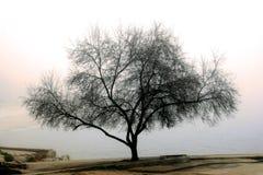 Baum in einem Nebel Lizenzfreies Stockfoto