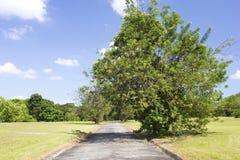 Baum in einem Park Stockfoto