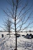 Baum in einem Park des verschneiten Winters Stockbilder
