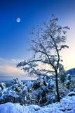 Baum in einem Schnee Stockbilder