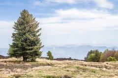 Baum an einem sonnigen Tag im vulkanischen Boden lizenzfreie stockfotos