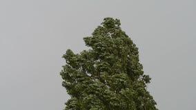 Baum in einem Sturm stock video