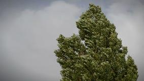 Baum in einem Sturm stock footage