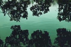 Baum in einem Sumpf Stockfoto