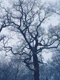 Baum in einem Winterwald Stockbild