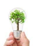 Baum in einer Glühlampe Lizenzfreie Stockbilder