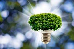 Baum in einer Glühlampe auf einem grünen Hintergrundabschluß oben Lizenzfreie Stockfotografie