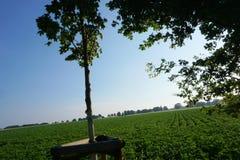 Baum in einer Mitte eines Feldes lizenzfreies stockbild