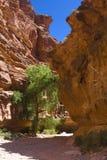 Baum in einer Schlucht stockbild