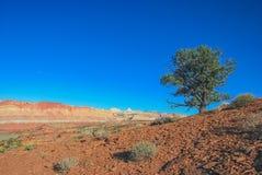 Baum in einer Wüste Lizenzfreies Stockfoto