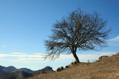 Baum Ende des Herbstes Lizenzfreie Stockfotos
