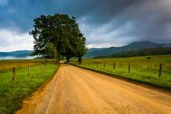 Baum entlang einem Schotterweg, auf einem nebeligen Morgen an der Cades Bucht, groß Stockfotos