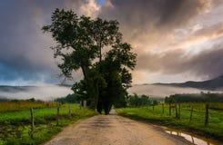 Baum entlang einem Schotterweg, auf einem nebeligen Morgen an der Cades Bucht, groß Lizenzfreies Stockfoto